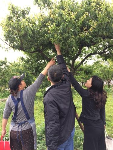 蘭陽校園全住宿書院【生態環境】主題活動-DIY有機紫蘇梅初體驗