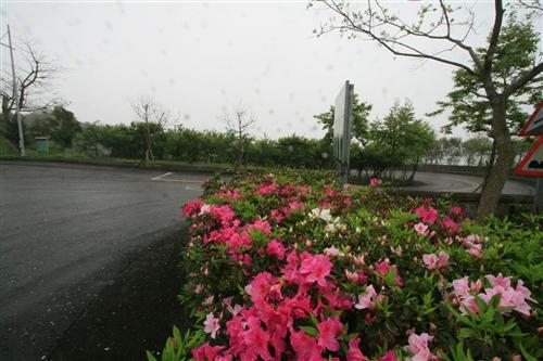 蘭陽校園的春天