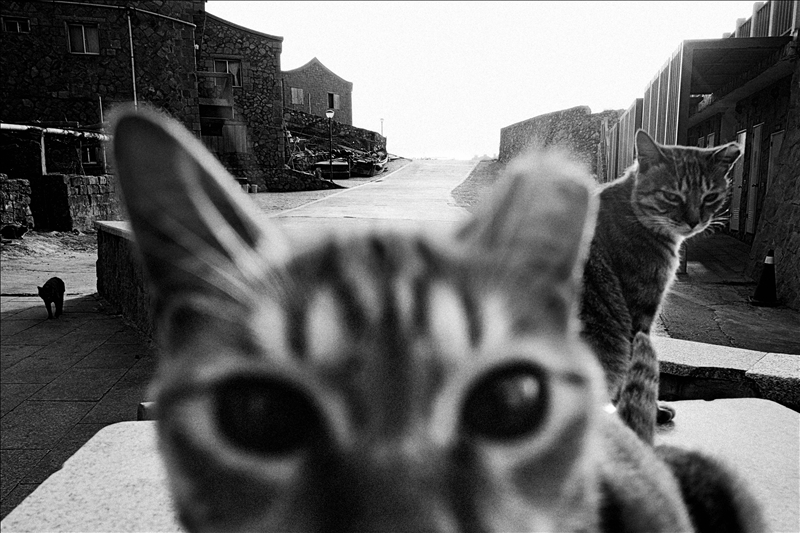 張良一圖文特寫類第二名作品:3隻貓在東莒福正村的路旁桌上曬太陽。(圖/張良一提供)
