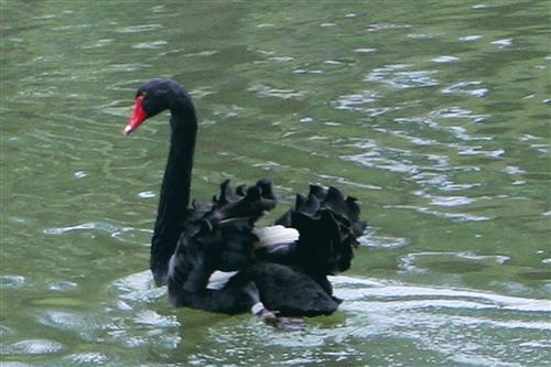 張創辦人期許淡江人:找到正面黑天鵝
