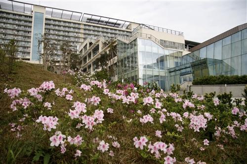 蘭陽校園杜鵑花